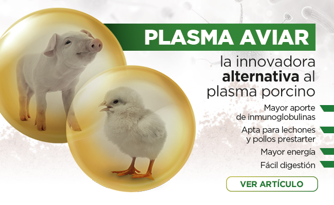 PLASMA AVIAR, la innovadora alternativa al plasma porcino