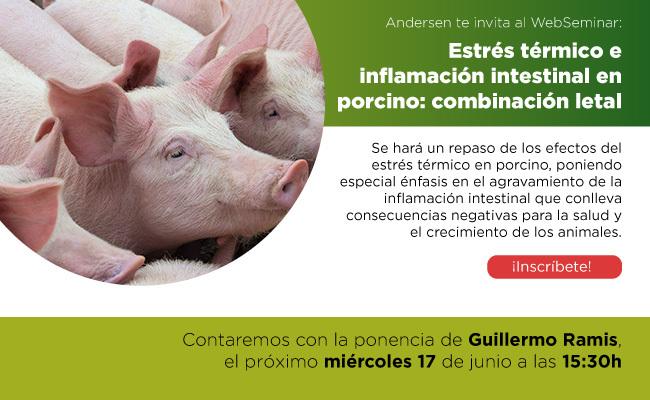 Estrés térmico e inflamación intestinal en porcino: combinación letal